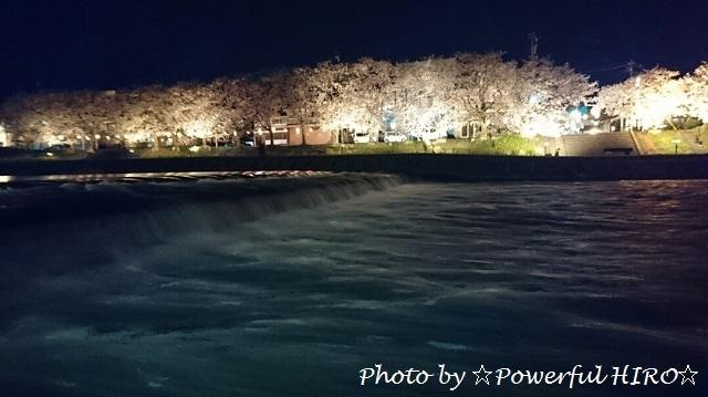 夜桜2017 (2)