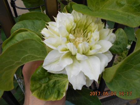 garden57-1.png