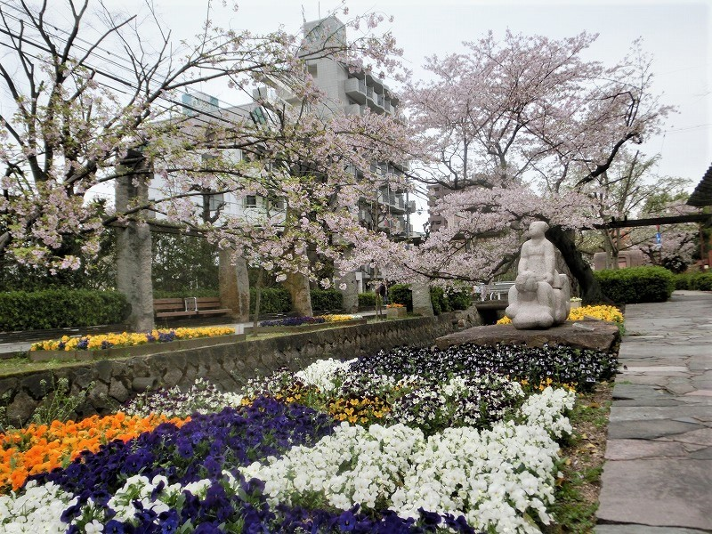 枝川緑道公園の桜1