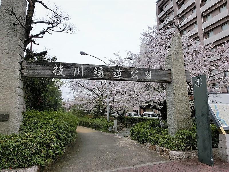 枝川緑道公園の桜6