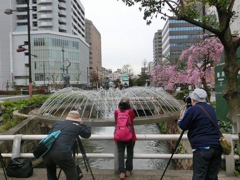 西川緑道公園の桜17
