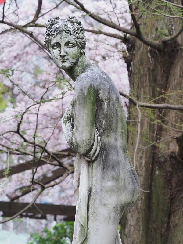 西川緑道公園の桜7t