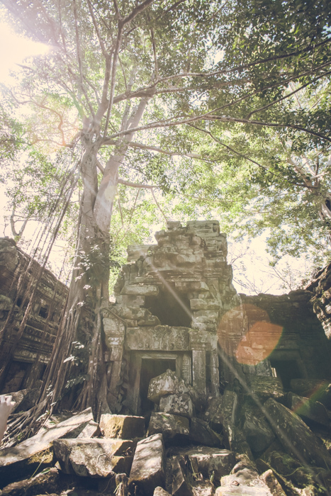 20170129_ta_prohm_temple_49.jpg