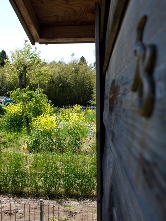 小屋と菜の花