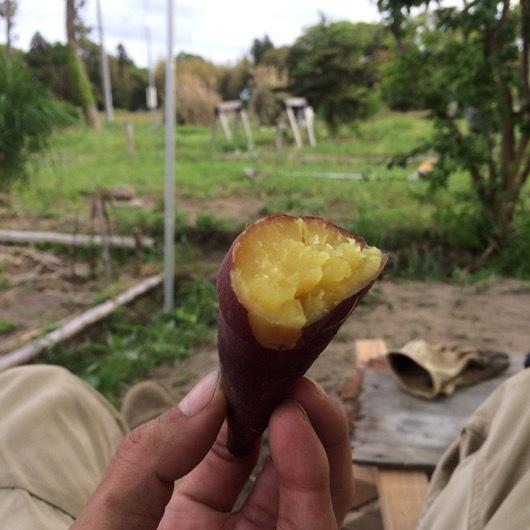 エコ作で作った焼き芋