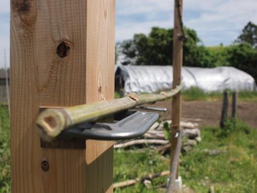 万力に竹を固定