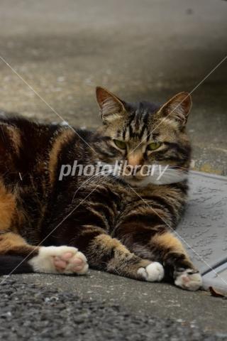 4965078 ノラ猫