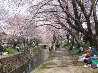 4/6 千本桜