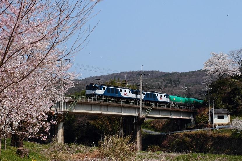 やっぱ日本人なら桜でしょう!