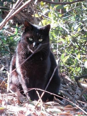 耳成山の野良猫