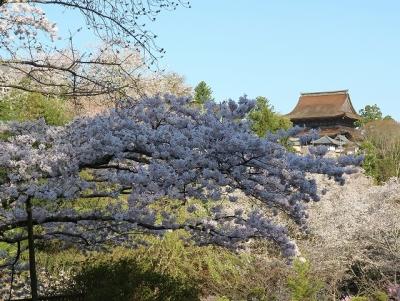 吉水神社参道からの眺め