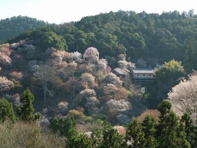 中千本から如意輪寺方面の眺め
