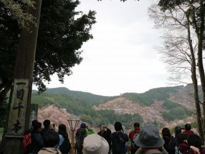 一目千本の桜