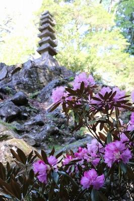 室生寺・奥の院のシャクナゲ