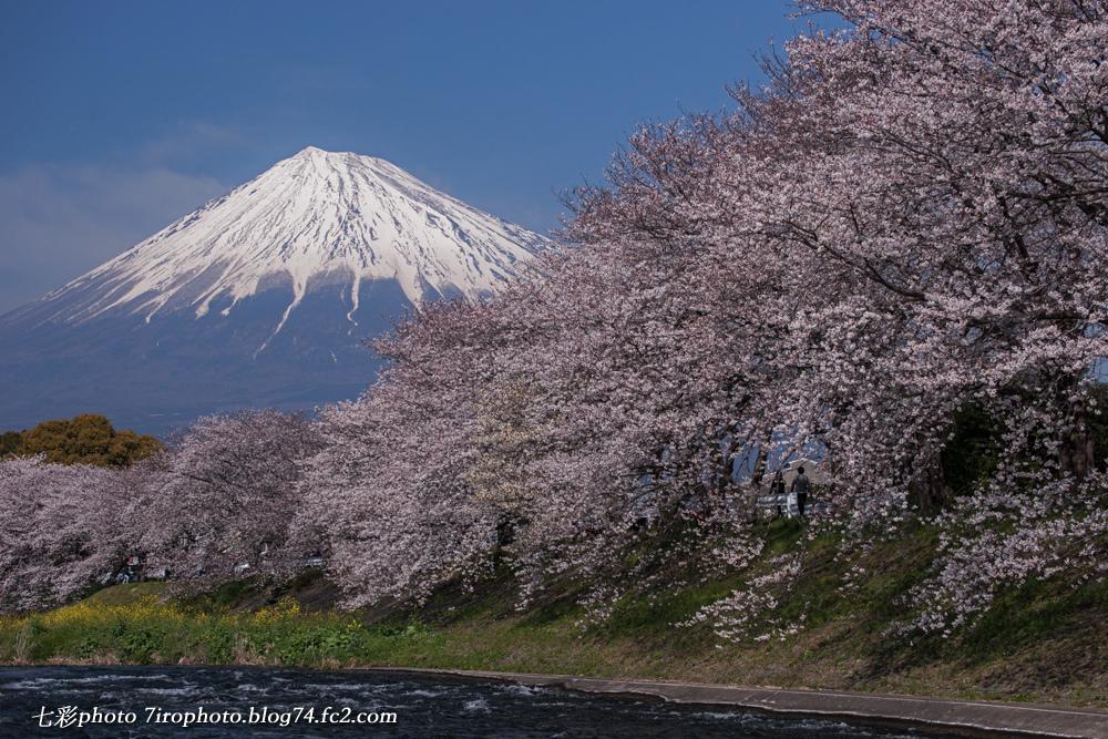 03-28-15_sakura_0099_edited-2.jpg