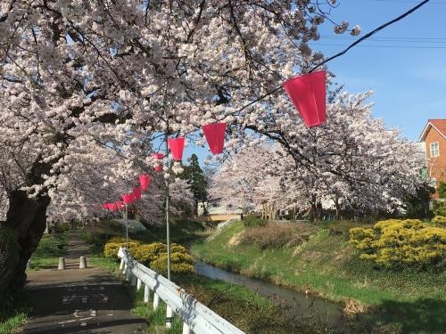 2017-04-10青田川