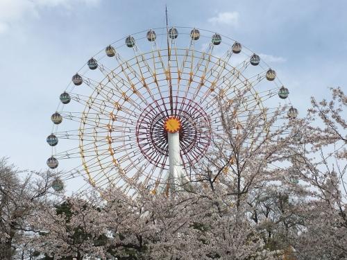 2017-04-21観覧車と桜