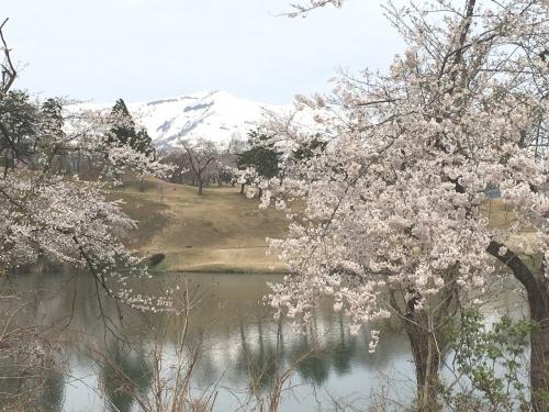 2017-04-21松ケ峰桜2