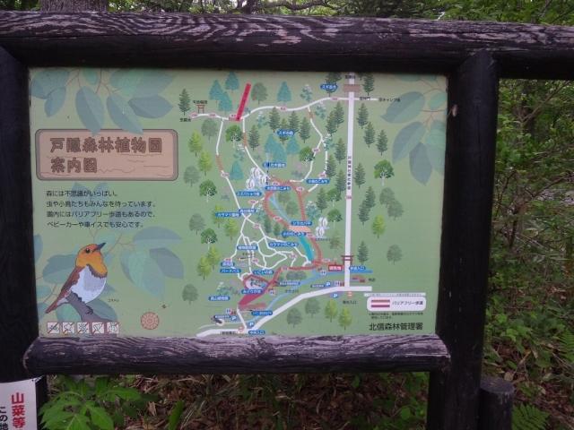 奥社の参道橋 (7)
