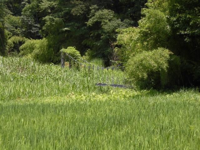 八坂小菅の水管吊橋① (3)
