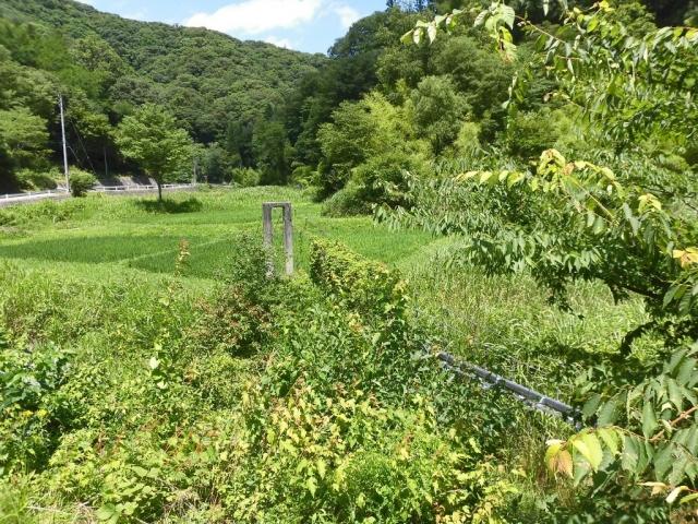 八坂小菅の水管吊橋② (7)