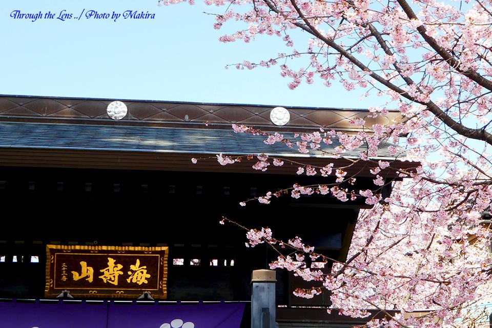 山門と安行桜TZ2