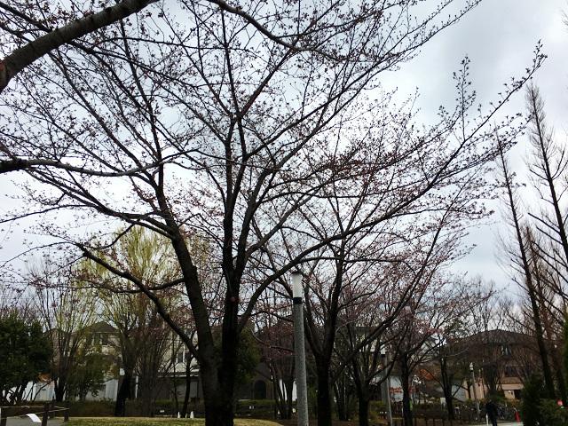 2017年4月1日東京桜2 by占いとか魔術とか所蔵画像