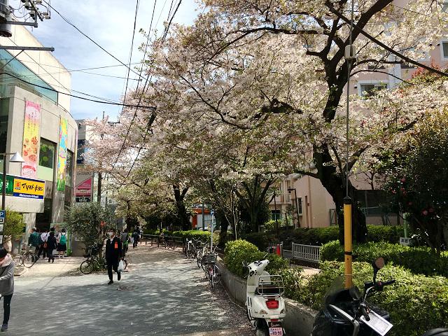 東京の桜散る1 by占いとか魔術とか所蔵画像