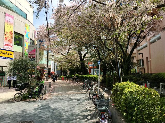 東京の桜散る2 by占いとか魔術とか所蔵画像