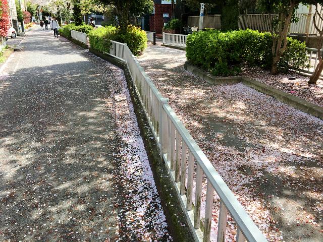 東京の桜散る5 by占いとか魔術とか所蔵画像