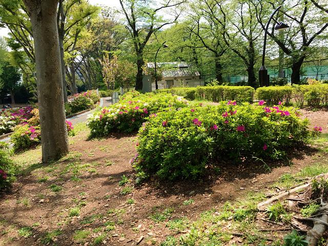 春の草木3 by占いとか魔術とか所蔵画像