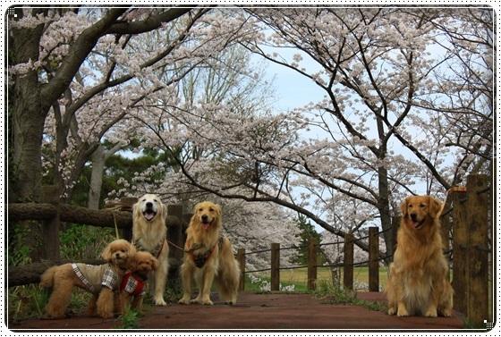 2017,4,10桜7
