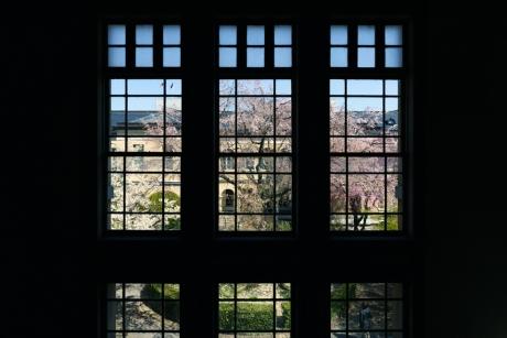 koto_sakura_2017_3.jpg