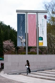 miho_m_sakura_1.jpg
