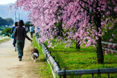 nakaragi_road_16.jpg