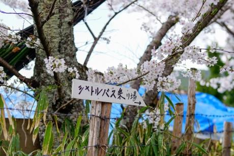 paradise_on_kyoto_1.jpg