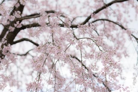 paradise_on_kyoto_23.jpg