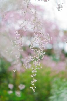 paradise_on_kyoto_25.jpg