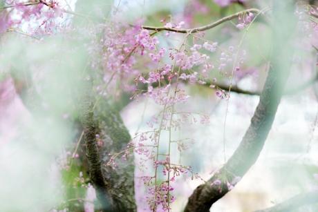 paradise_on_kyoto_9.jpg