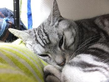 今はここで寝たいんです。2