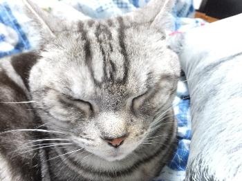 猫顔クッション4