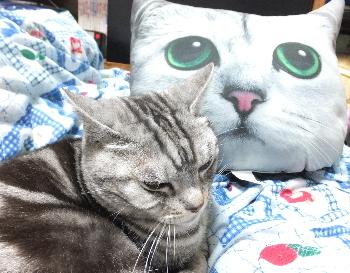 猫顔クッション1