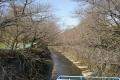 石神井川です