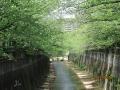 石神井川③