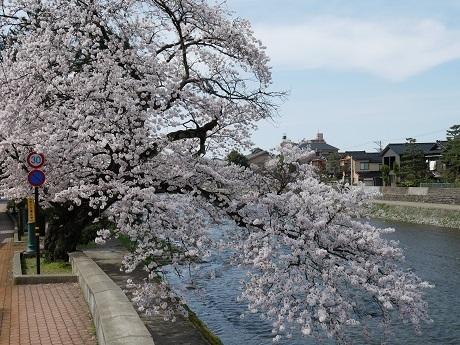 0412asanogawa1.jpg
