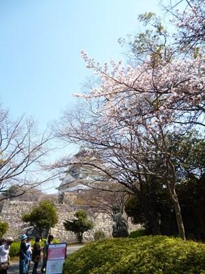 大阪城桜6