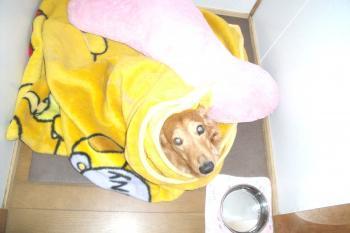 うみ毛布3