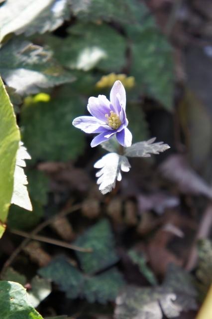 春近し ①