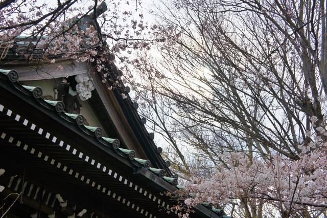 桜パトロール ① 12
