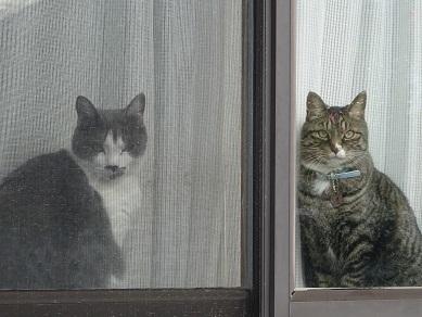 トラちゃんとジョニー